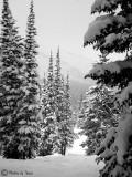 Snowbird /Alta