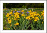 The Presby Memorial Iris Gardens