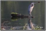 August Busch Wildlife Preserve