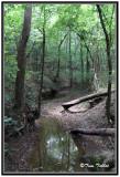 Shady Lazy Creek