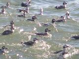 Duck LT CBBT 1-09 ab.JPG