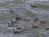 Duck LT CBBT 1-09 ac.JPG