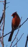 Cardinal 02-11 Hampton aa.JPG
