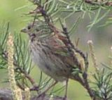 Sparrow Lincoln Mio MI 1.jpg