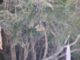 Sparrow Tree Upper Pen SSM MI 1-05.JPG
