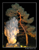 la Magie des lanternes (À l'entrée du Jardin de Chine)