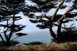 Marin Headlands through the trees0937.jpg