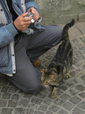 Friendly Orvieto kitty7219