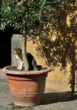 Friendly cat on Piazza della Repubblica8610