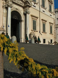 Mimosas at the Quirinale1502