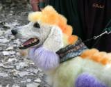 Colorful Poodle
