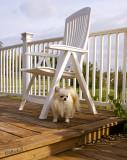 Small Dog 2008