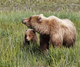 Her Only Cub