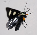 Moth On Glass