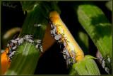 I hate bugs!!!