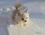 Snow Bunny 2011