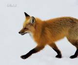 Enter Foxy