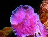 Tube Sponge close