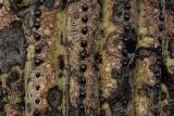 Saguaro texture