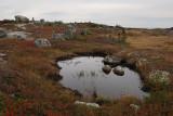 Small pool and glacial eratics