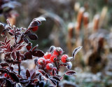 Seasons first frost