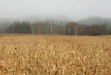 Fall field and fog