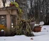 Garden detritus