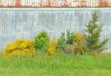 Unintended garden