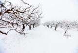 Off season orchard