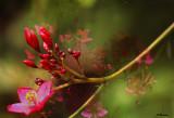 Flower Montage.jpg