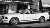 The Mustang.jpg