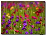 Spring .jpg