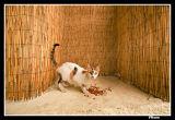 Bamboo Cat.jpg