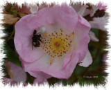Dog Rose and visitors.