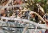 A young sparrow who thought it was hiding.