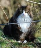 Cat 1.