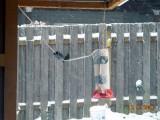 Winter Hummingbird Heaters