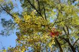 Colors in the canopy