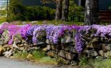 The Purple Wall