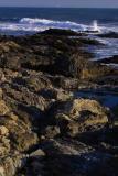 shoreline, shelter cove