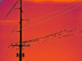 A Few Birds on a Wire, Orange Sky, Montana