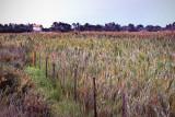 Farmhouse and Field, Camargue