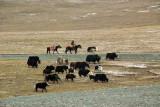Yakherder ,ear the Qinghai-Tibet border