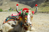 Although the yak was mentioned in my itinerary, the guide insisted it was not included