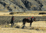 Tibetan man plowing a field the old fashioned way