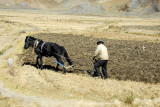 Tibetan farmer plowing with a horse-drawn plow