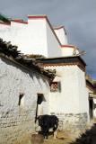 Shigatse Dzong rising above Old Town