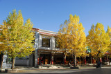 Autumn foliage along Buxing Jie street , Shigatse