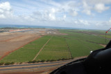 Coming in over the cane fields of the Central Valley, Maui