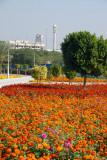 Flowers, Zabeel Park